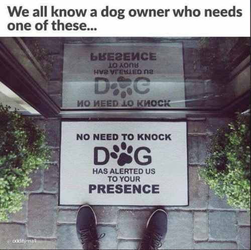 We All Know A: We all know a dog owner who needs  one of these...  NO NEED TO KNOCK  DSG  HAS ALERTED US  TO YOUR  PRESENCE  odditymal
