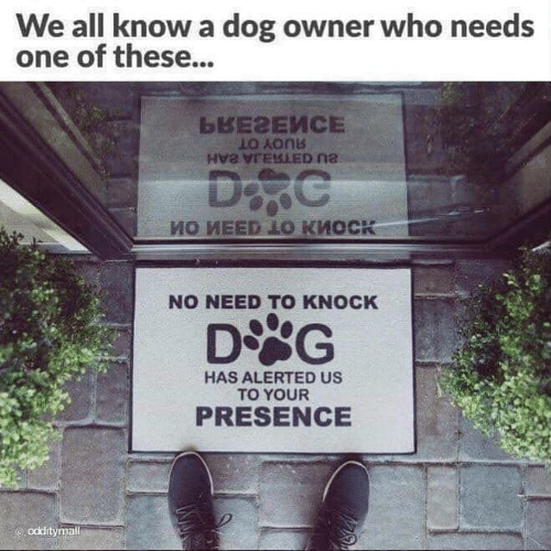 We All Know A: We all know a dog owner who needs  one of these...  LO Aonb  NO NEED TO KNOCK  HAS ALERTED US  TO YOUR  PRESENCE  odditymall