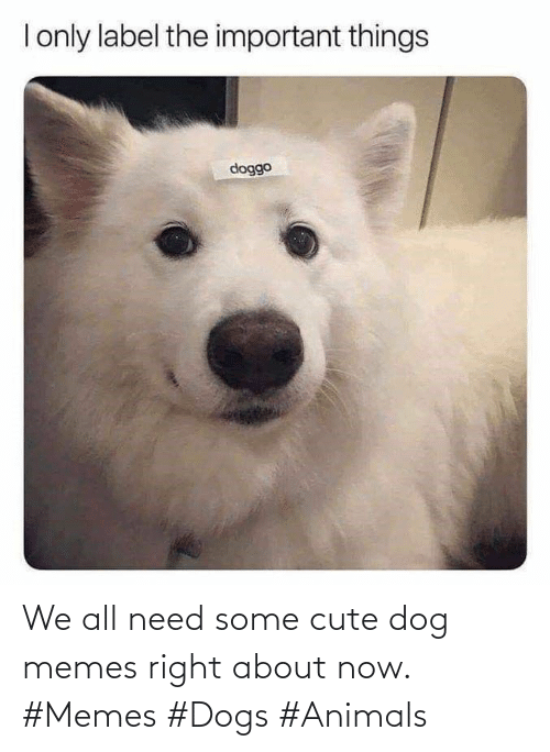 Memes Dogs: We all need some cute dog memes right about now. #Memes #Dogs #Animals