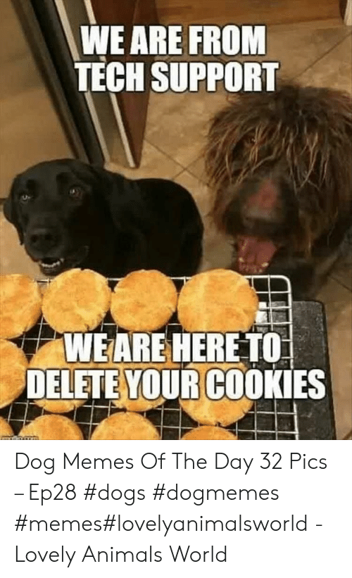 Tech Support: WE ARE FROM  TECH SUPPORT  WEARE HERE TO  DELETE YOUR COOKIES Dog Memes Of The Day 32 Pics – Ep28 #dogs #dogmemes #memes#lovelyanimalsworld - Lovely Animals World