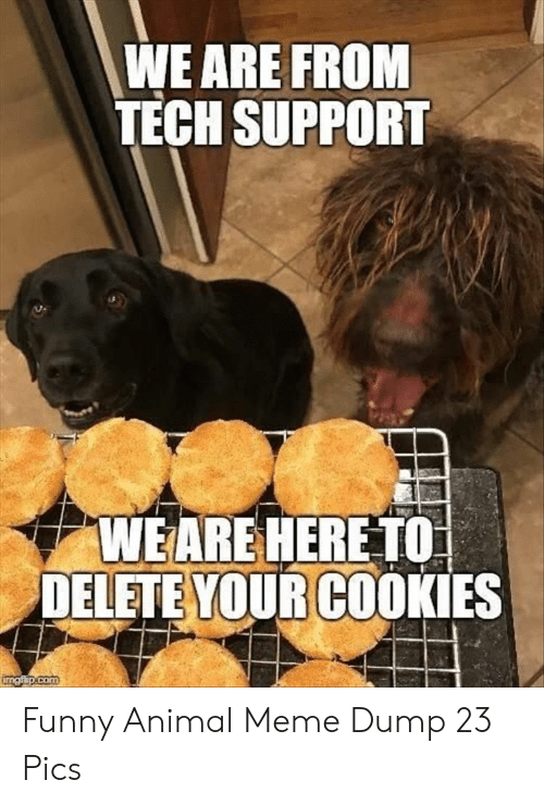 Tech Support: WE ARE FROM  TECH SUPPORT  WEARE HERETO  DELETE YOUR COOKIES  com Funny Animal Meme Dump 23 Pics