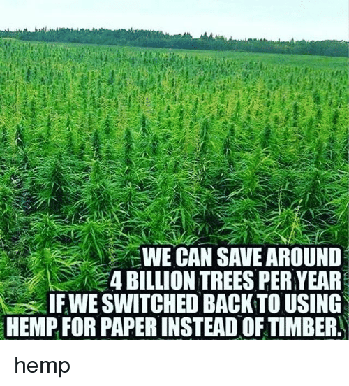 Memes, Trees, and Back: WE CAN SAVE AROUND  4 BILLION TREES PER YEAR  IF WE SWITCHED BACK TO USING  HEMP FOR PAPERINSTEAD OF TIMBER hemp