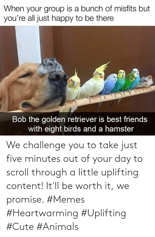 worth it: We challenge you to take just five minutes out of your day to scroll through a little uplifting content! It'll be worth it, we promise. #Memes #Heartwarming #Uplifting #Cute #Animals