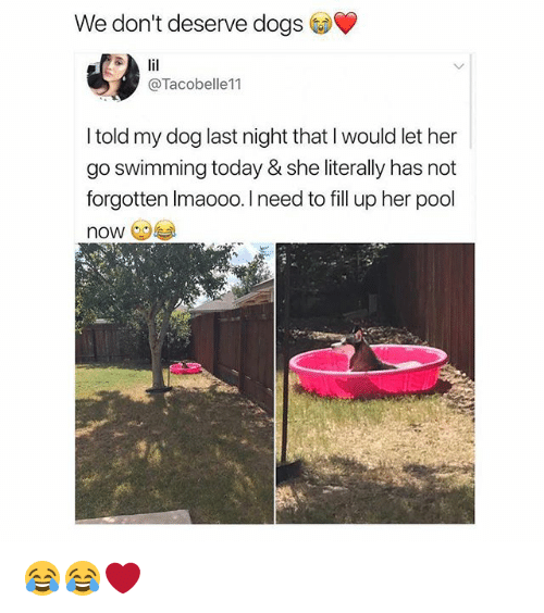 Dogs, Memes, and Pool: We don't deserve dogs  @Tacobelle11  I told my dog last night that I would let her  go swimming today & she literally has not  forgotten Imaooo. I need to fill up her pool  now 😂😂❤️