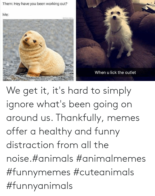 We Get It: We get it, it's hard to simply ignore what's been going on around us.  Thankfully, memes offer a healthy and funny distraction from all the noise.#animals #animalmemes #funnymemes #cuteanimals #funnyanimals