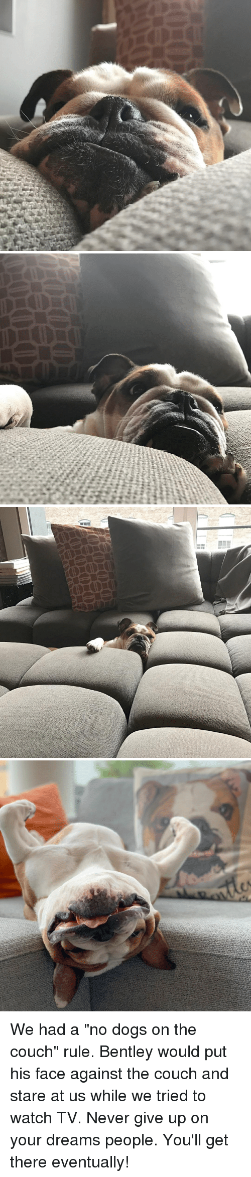 """We Tried: We had a """"no dogs on the couch"""" rule. Bentley would put his face against the couch and stare at us while we tried to watch TV. Never give up on your dreams people. You'll get there eventually!"""