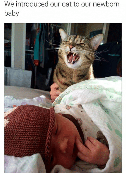 Baby, It's Cold Outside: We introduced our cat to our newborn  baby
