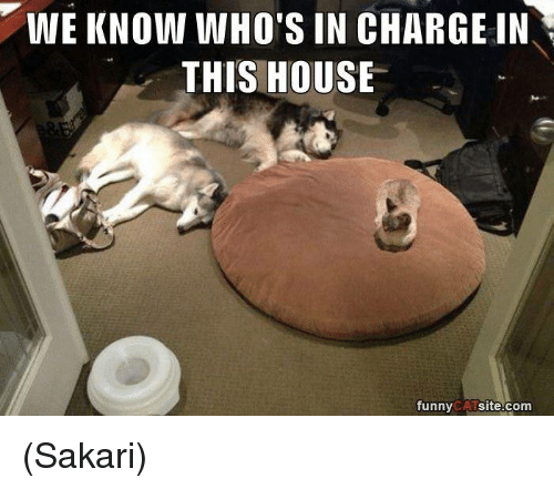 funny cat: WE KNOW WHO'S IN CHARGE IN  THIS HOUSE  funny  CAT  site.com (Sakari)