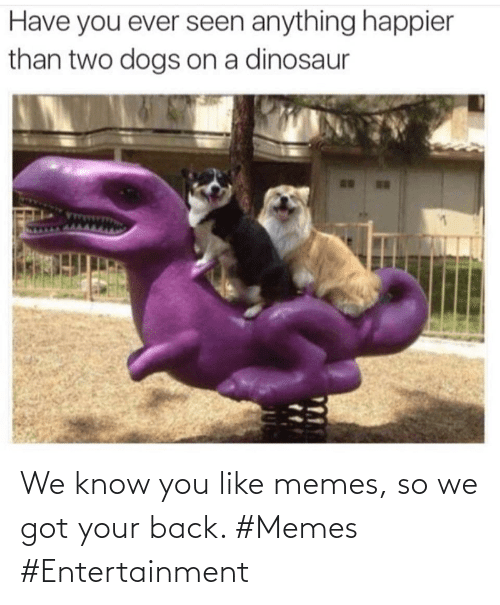 We Know: We know you like memes, so we got your back. #Memes #Entertainment