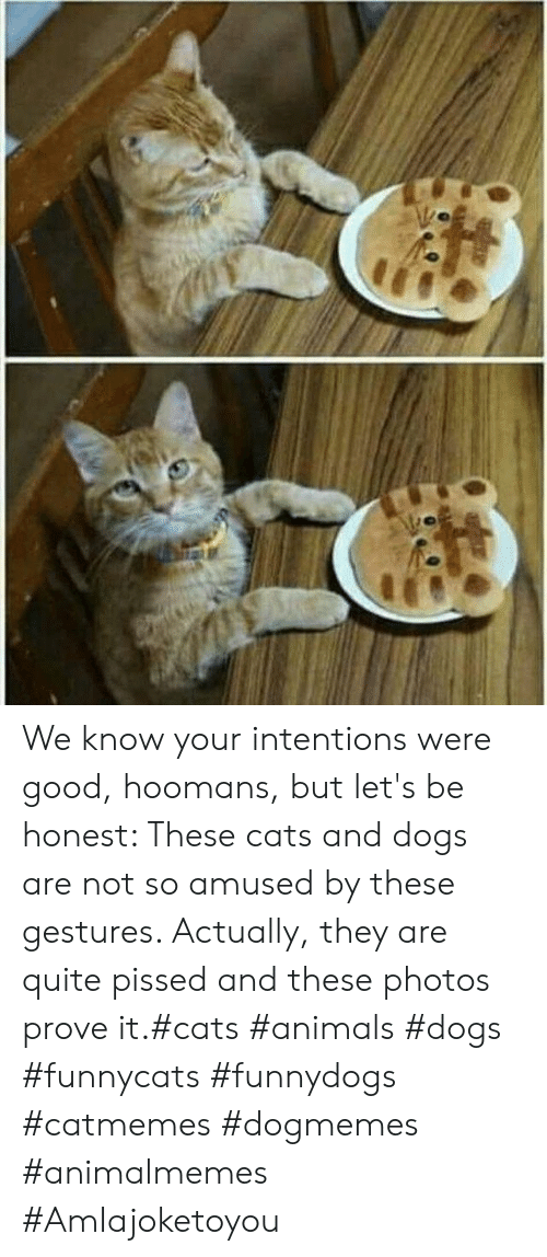 Gestures: We know your intentions were good, hoomans, but let's be honest: These cats and dogs are not so amused by these gestures. Actually, they are quite pissed and these photos prove it.#cats #animals #dogs #funnycats #funnydogs #catmemes #dogmemes #animalmemes #AmIajoketoyou