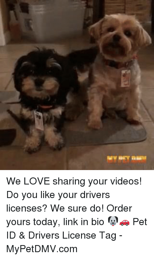 Love, Memes, and Videos: We LOVE sharing your videos! Do you like your drivers licenses? We sure do! Order yours today, link in bio 🐶🚗 Pet ID &  Drivers License Tag  - MyPetDMV.com