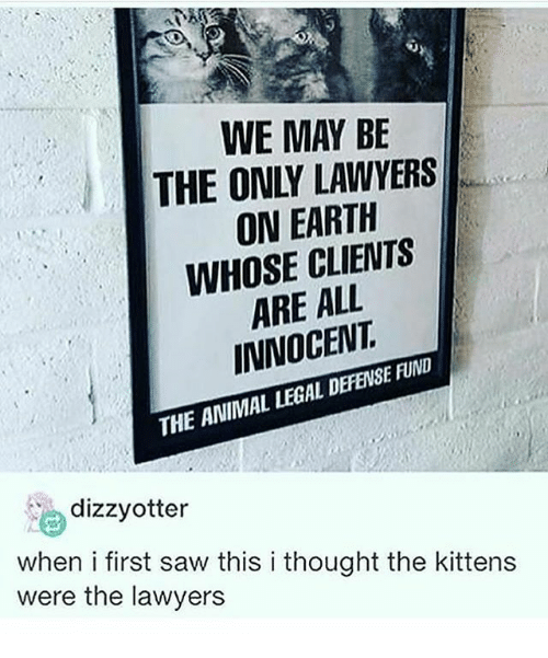 Otterly: WE MAY BE  THE ONLY LAWYERS  ON EARTH  WHOSE ARE ALL  LEGAL DEFENS  THE ANIMAL  dizzy otter  when i first saw this i thought the kittens  were the lawyers