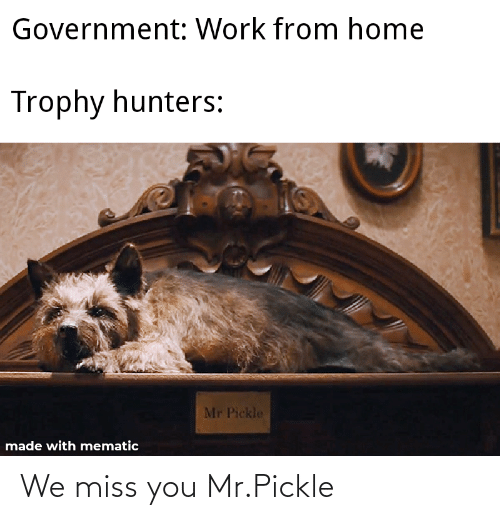 We Miss You: We miss you Mr.Pickle