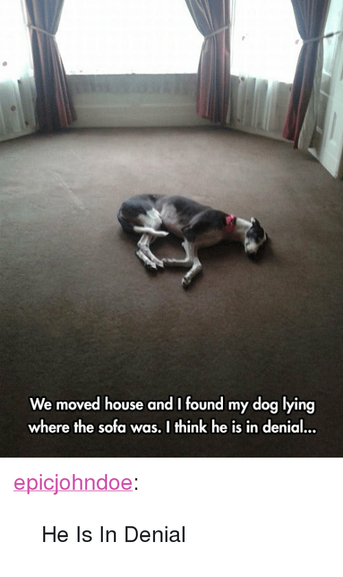 """in denial: We moved house and I found my dog lying  where the sofa was. I think he is in denial <p><a href=""""https://epicjohndoe.tumblr.com/post/172389543046/he-is-in-denial"""" class=""""tumblr_blog"""">epicjohndoe</a>:</p>  <blockquote><p>He Is In Denial</p></blockquote>"""