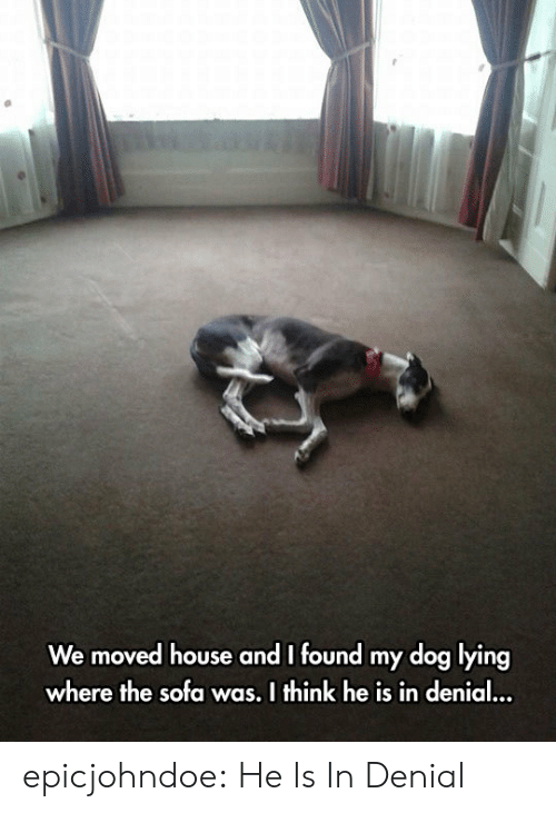 in denial: We moved house and I found my dog lying  where the sofa was. I think he is in denial epicjohndoe:  He Is In Denial