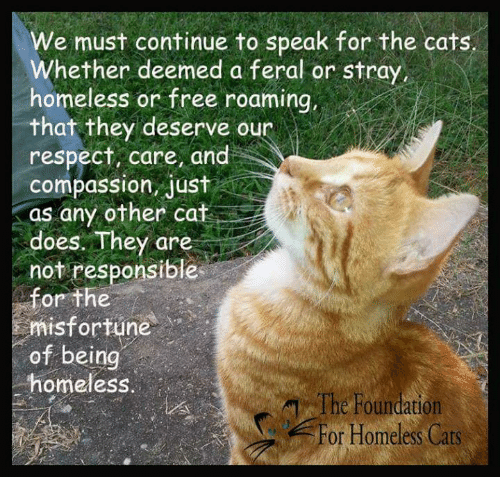 Misfortunately: We must continue to speak for the cats.  Whether deemed a feral or stray,  homeless or free roaming,  that they deserve our  respect, care, and  compassion, Jus  as any other cat  CA  does. They are  not responsible  for the  misfortune  of being  homeless  The Foundation  For Homeless Cats