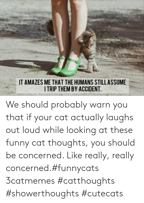 loud: We should probably warn you that if your cat actually laughs out loud while looking at these funny cat thoughts, you should be concerned. Like really, really concerned.#funnycats 3catmemes #catthoughts #showerthoughts #cutecats