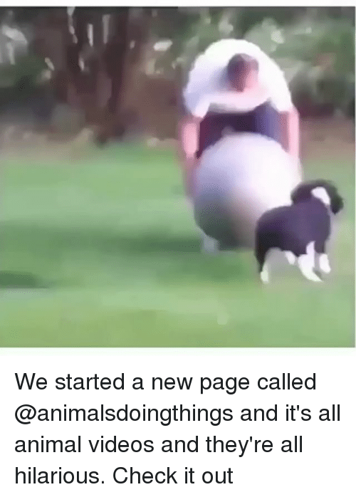 Videos, Animal, and Dank Memes: We started a new page called @animalsdoingthings and it's all animal videos and they're all hilarious. Check it out