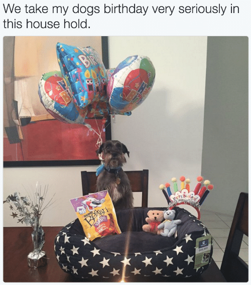 Birthday: We take my dogs birthday very seriously in  this house hold.  0