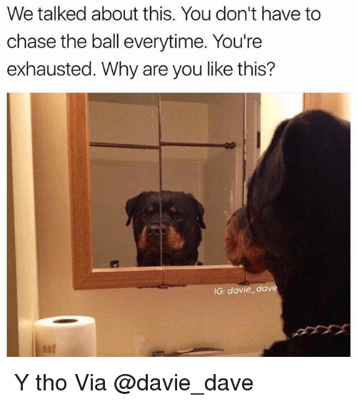Memes, Chase, and Why Are You Like This: We talked about this. You don't have to  chase the ball everytime. You're  exhausted. Why are you like this?  IG: davie dave  sal Y tho Via @davie_dave