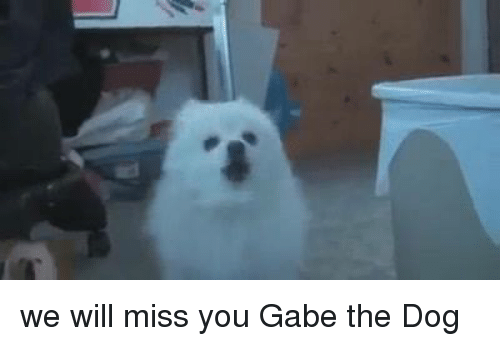 Gabe: we will miss you Gabe the Dog