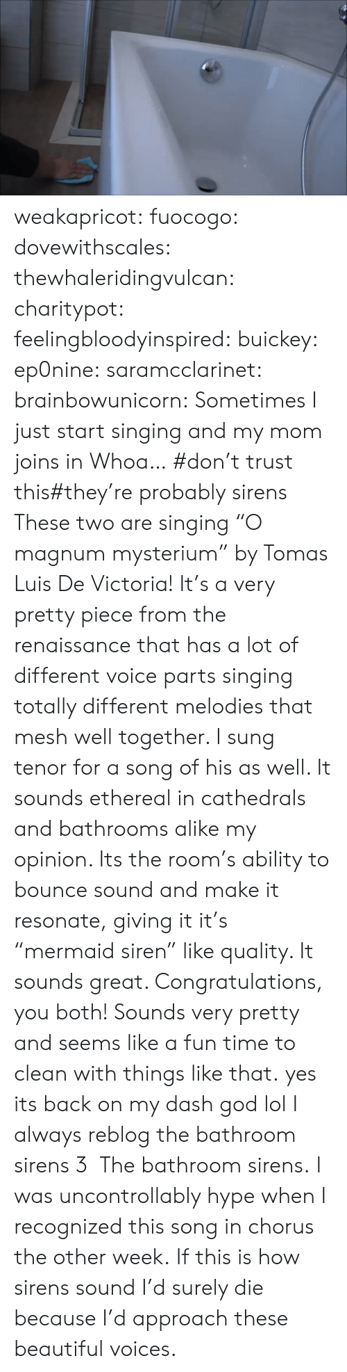 """tenor: weakapricot:  fuocogo:  dovewithscales:  thewhaleridingvulcan:  charitypot:  feelingbloodyinspired:  buickey:  ep0nine:  saramcclarinet:  brainbowunicorn:  Sometimes I just start singing and my mom joins in  Whoa…  #don't trust this#they're probably sirens  These two are singing """"O magnum mysterium"""" by Tomas Luis De Victoria! It's a very pretty piece from the renaissance that has a lot of different voice parts singing totally different melodies that mesh well together. I sung tenor for a song of his as well. It sounds ethereal in cathedrals and bathrooms alike my opinion. Its the room's ability to bounce  sound and make it resonate, giving it it's """"mermaid siren"""" like quality. It sounds great. Congratulations, you both! Sounds very pretty and seems like a fun time to clean with things like that.  yes its back on my dash  god lol  I always reblog the bathroom sirens 3  The bathroom sirens.   I was uncontrollably hype when I recognized this song in chorus the other week.   If this is how sirens sound I'd surely die because I'd approach these beautiful voices."""