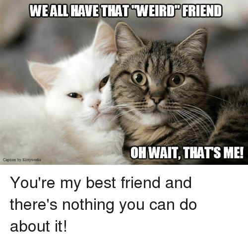 youre my best friend: WEAL HAVE THAT WEIRD FRIEND  OH WAIT, THATS ME!  Caption by Kittyworks You're my best friend and there's nothing you can do about it!