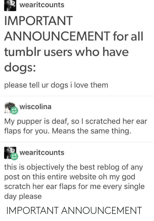 tumblr users: wearitcounts  IMPORTANT  ANNOUNCEMENT for all  tumblr users who have  dogs:  please tell ur dogs i love them  wiscolina  My pupper is deaf, so I scratched her ear  flaps for you. Means the same thing.  wearitcounts  this is objectively the best reblog of any  post on this entire website oh my god  scratch her ear flaps for me every single  day please IMPORTANT ANNOUNCEMENT