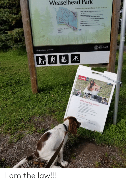 I Am The Law: Weaselhead Park  You are entering a natural area. Be safe. Be aware  d  t  g bun t e  w  e tral w  tr wi  Daa m  po  CALGARY  calgary.ca/parks I call 3-1-1  Calgary  Attention dog owners  oueego  beod et  an  ettoewe  rdog ad nopely  He  ry c  wontact ST ue onoain  Pick p dog wa I am the law!!!