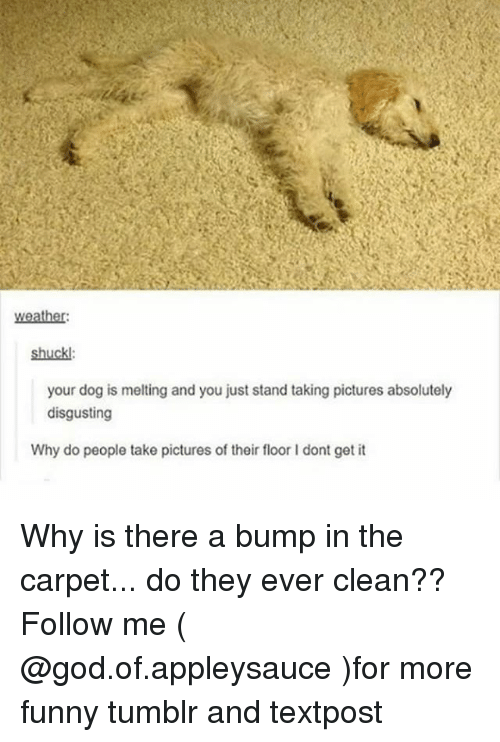 absolutely disgusting: weather:  shuckl:  your dog is melting and you just stand taking pictures absolutely  disgusting  Why do people take pictures of their floor I dont get it Why is there a bump in the carpet... do they ever clean?? Follow me ( @god.of.appleysauce )for more funny tumblr and textpost