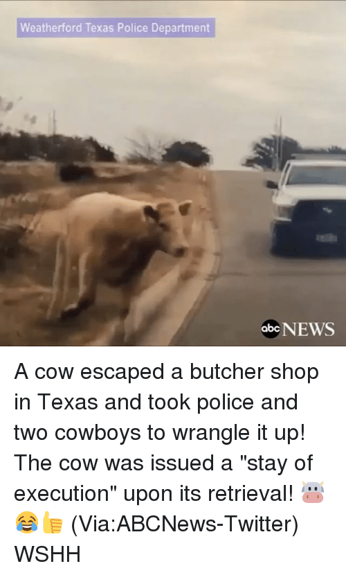 """departed: Weatherford Texas Police Department  abc  NEWS A cow escaped a butcher shop in Texas and took police and two cowboys to wrangle it up! The cow was issued a """"stay of execution"""" upon its retrieval! 🐮😂👍 (Via:ABCNews-Twitter) WSHH"""