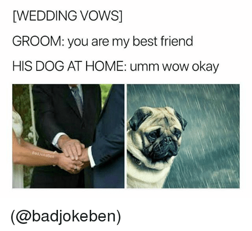 Best Friend, Wow, and Best: [WEDDING VOWS]  GROOM: you are my best friend  HIS DOG AT HOME: umm wow okay  BadJokeBen (@badjokeben)