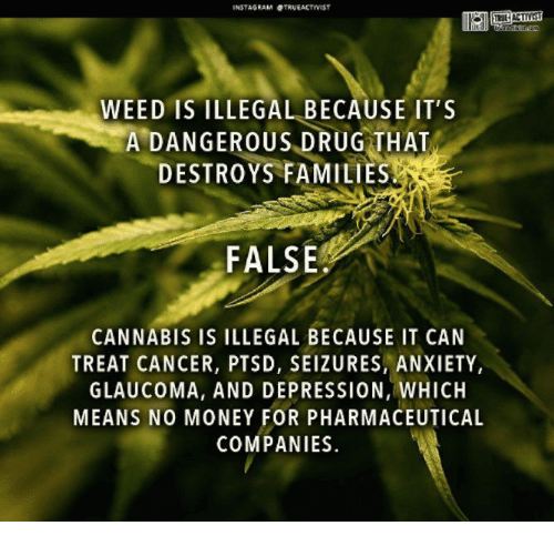 Cannabis: WEED IS ILLEGAL BECAUSE IT'S  A DANGEROUS DRUG THAT  DESTROYS FAMILIES  FALSE  CANNABIS IS ILLEGAL BECAUSE IT CAN  TREAT CANCER, PTSD, SEIZURES, ANXIETY,  GLAUCOMA, AND DEPRESSION, WHICH  MEANS NO MONEY FOR PHARMACEUTICAL  COMPANIES