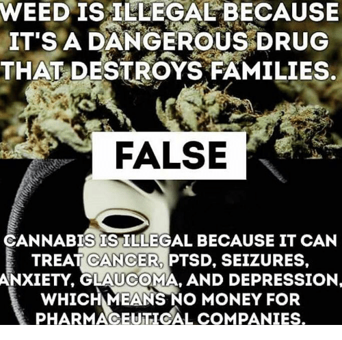 Cannabis: WEED IS ILLEGAL BECAUSE  IT'S A DANGEROUS DRUG  THAT DESTROYS FAMILIES.  FALSE  CANNABIS IS ILLEGAL BECAUSE IT CAN  TREAT CANCER PTSD, SEIZURES,  ANXIETY, GLAUCOMA, AND DEPRESSION  wHICHMEANS NO MONEY PHARMACEUTICAL COMPANIES.