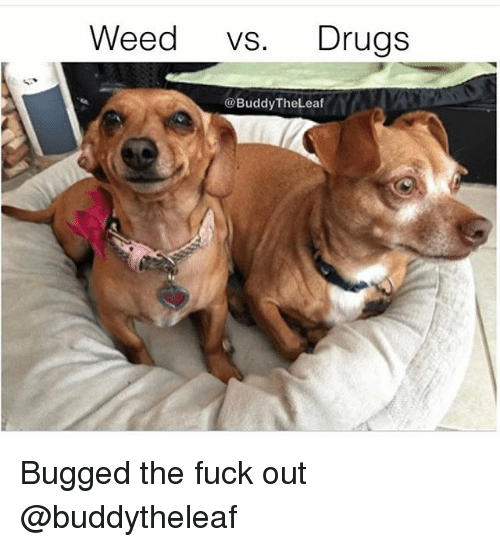 Drugs, Weed, and Fuck: Weed vs. Drugs  @BuddyTheLeaf Bugged the fuck out @buddytheleaf