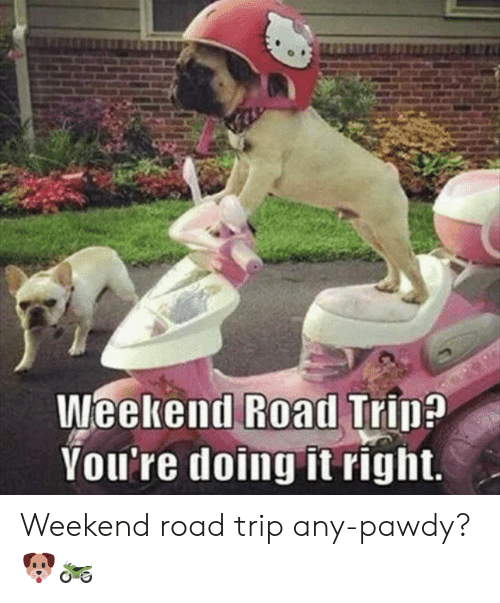 Youre Doing It Right: Weekend Road Trin?  You're doing it right. Weekend road trip any-pawdy? 🐶🏍
