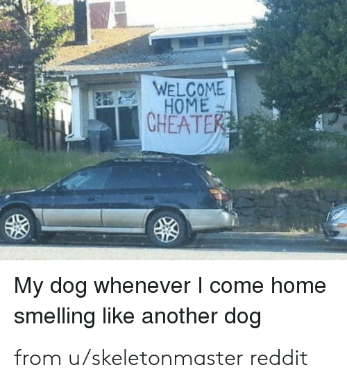 welcome-home: WELCOME  HOME  CHEATER  My dog whenever I come home  smelling like another dog from u/skeletonmaster reddit