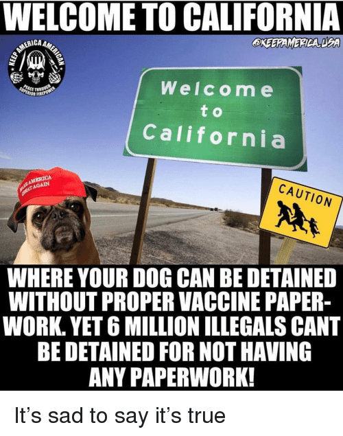 Memes, True, and Say It: WELCOME TO CALIFORNIA  CA AMER  OKEEAMERDA DEA  Welcom e  CETHR  IOR FIREP  California  CAUTION  AGAIN  WHERE YOUR DOG CAN BE DETAINED  WITHOUT PROPER VACCINE PAPER  WORK. YET 6 MILLION ILLEGALS CANT  BE DETAINED FOR NOT HAVING  ANY PAPERWORK! It's sad to say it's true