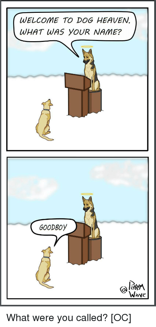 You Called: WELCOME TO DOG HEAVEN.  WHAT WAS YOUR NAME?  GOODBOy  W>ve What were you called? [OC]