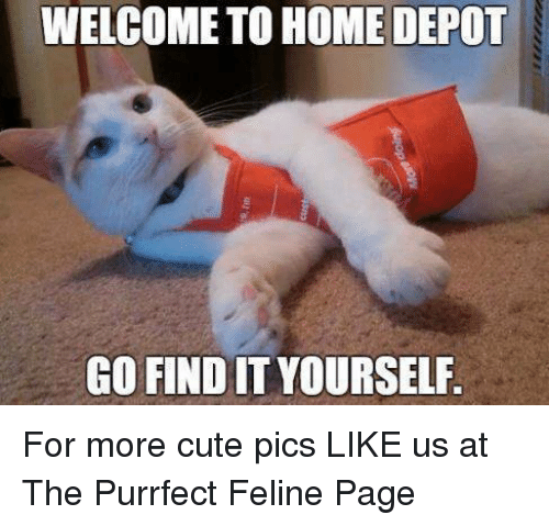 Memes, Home Depot, and 🤖: WELCOME TO HOME DEPOT  GO FIND IT YOURSELF For more cute pics LIKE us at The Purrfect Feline Page