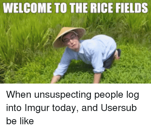 Ricing: WELCOME TO THE RICE FIELDS When unsuspecting people log into Imgur today, and Usersub be like