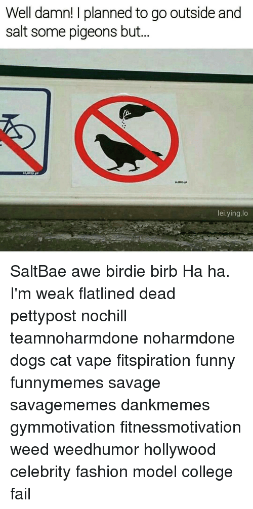 awe: Well damn! planned to go outside and  salt some pigeons but  lei ying lo SaltBae awe birdie birb Ha ha. I'm weak flatlined dead pettypost nochill teamnoharmdone noharmdone dogs cat vape fitspiration funny funnymemes savage savagememes dankmemes gymmotivation fitnessmotivation weed weedhumor hollywood celebrity fashion model college fail