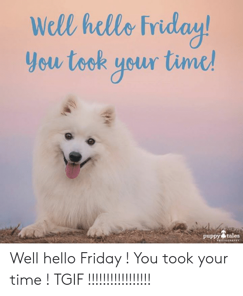 Hello Friday: Well helle Friday  you took yeur tinc  puppy tales  PHOTOGRAPHY Well hello Friday ! You took your time ! TGIF !!!!!!!!!!!!!!!!!