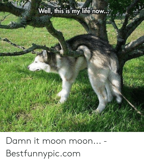 Bestfunnypic: Well, this is my life now... Damn it moon moon... - Bestfunnypic.com