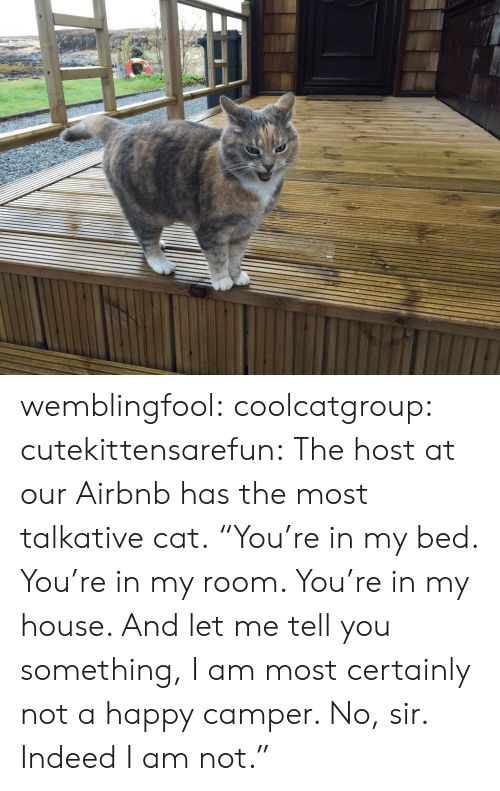"Camper: wemblingfool:  coolcatgroup:  cutekittensarefun:  The host at our Airbnb has the most talkative cat.    ""You're in my bed. You're in my room. You're in my house. And let me tell you something, I am most certainly not a happy camper. No, sir. Indeed I am not."""