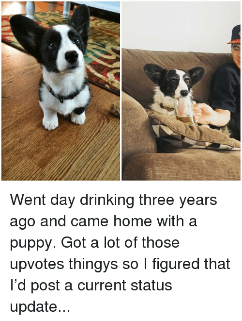 Drinking, Home, and Puppy: Went day drinking three years ago and came home with a puppy. Got a lot of those upvotes thingys so I figured that I'd post a current status update...