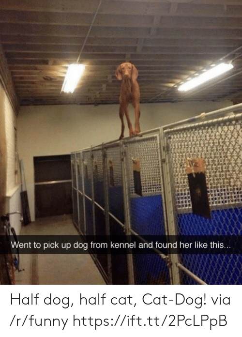 cat dog: Went to pick up dog from kennel and found her like this... Half dog, half cat, Cat-Dog! via /r/funny https://ift.tt/2PcLPpB