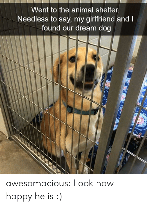 needless: Went to the animal shelter  Needless to say, my girlfriend and  found our dream dog awesomacious:  Look how happy he is :)