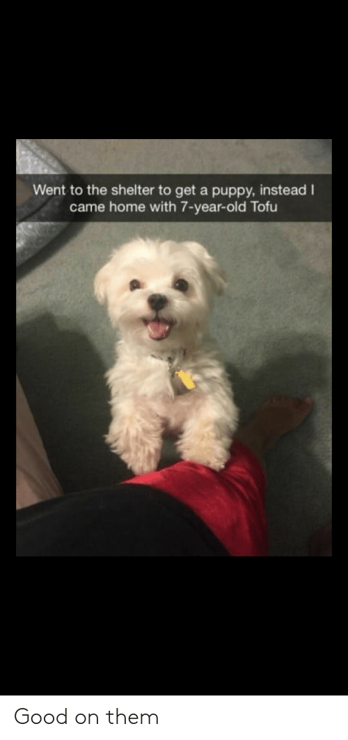 tofu: Went to the shelter to get a puppy, instead I  came home with 7-year-old Tofu Good on them