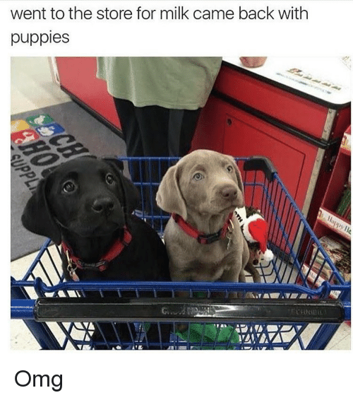 went to the store for milk came back with puppies omg omg meme on sizzle. Black Bedroom Furniture Sets. Home Design Ideas